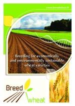 Breeding for economically and environmentally sustainable wheat